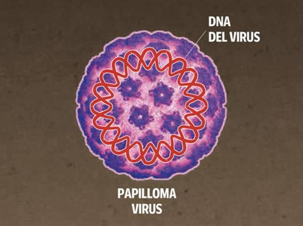 papilloma virus ad un uomo)