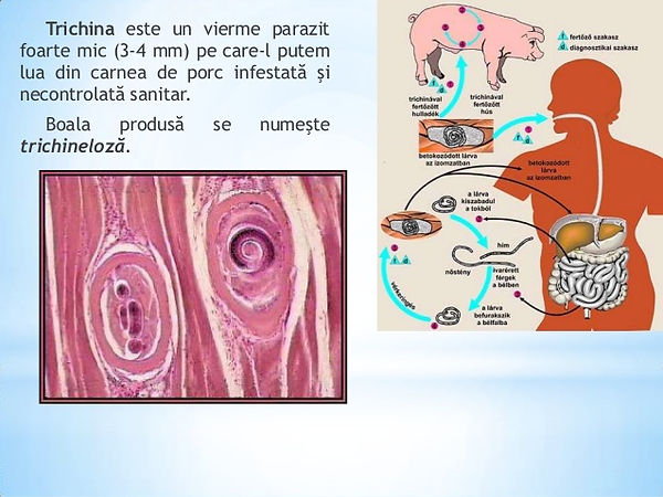 paraziți in ficat virus de papiloma humano medicamentos
