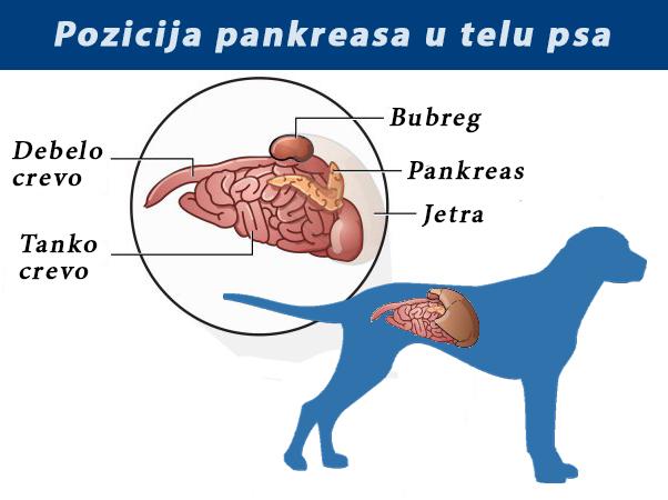 paraziti u krvi kod pasa)