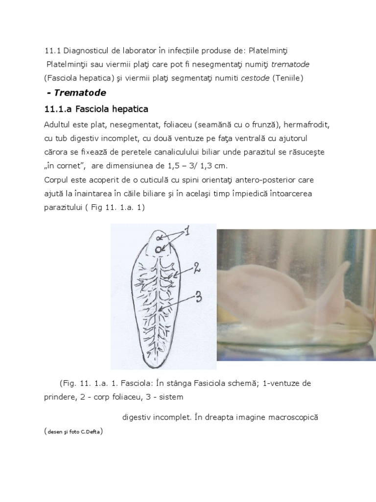 parazitoza tisulara nasal respiratory papillomatosis
