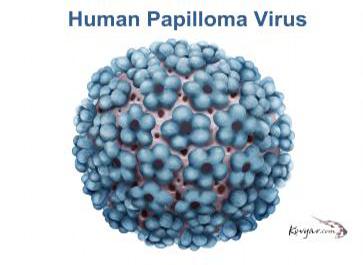 virus hpv (human papilloma virus)