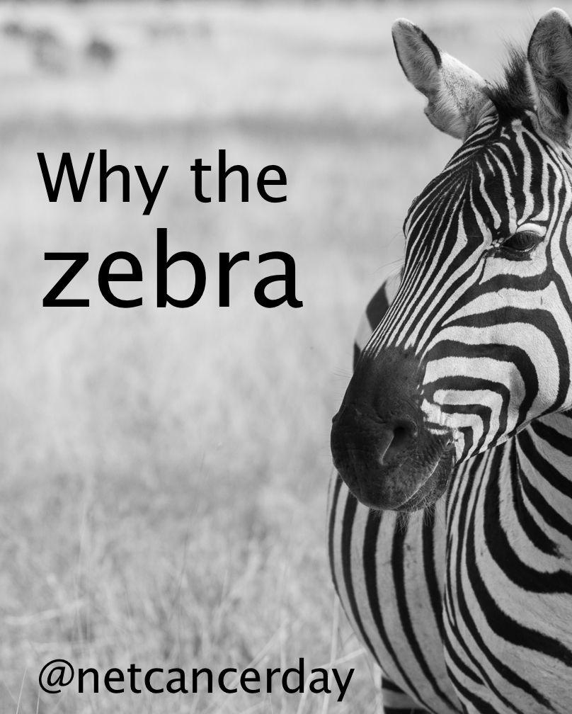 neuroendocrine cancer zebra)