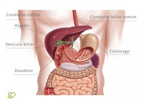 cancer de pancreas y vesicula biliar)