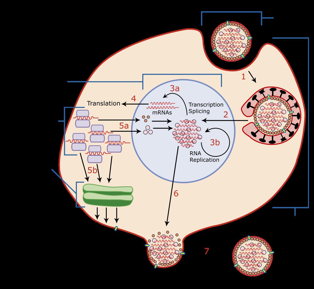 papilloma virus definitie