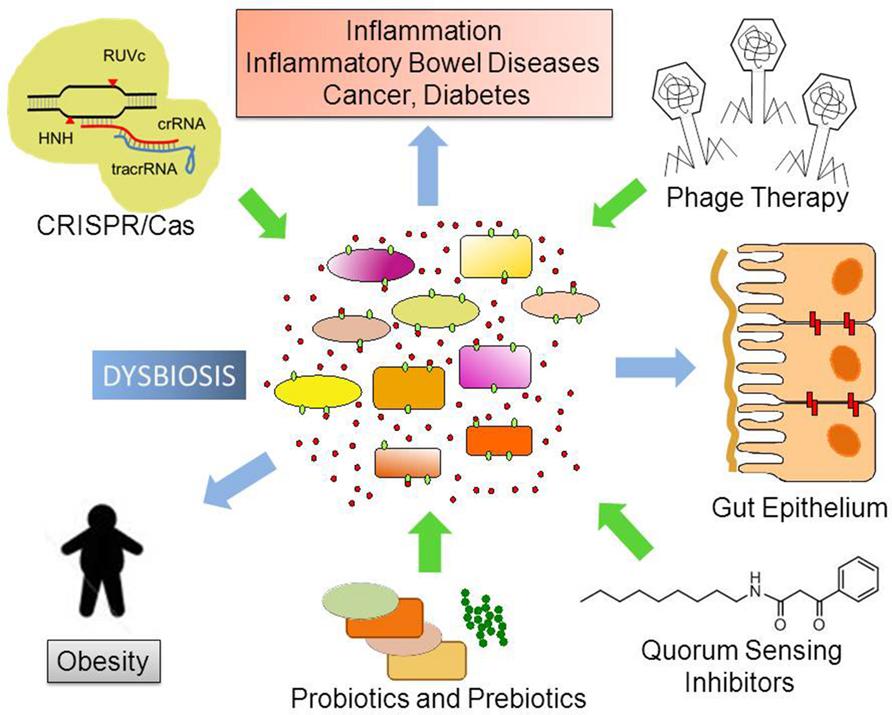 dysbiosis paraziti intestinali ficat