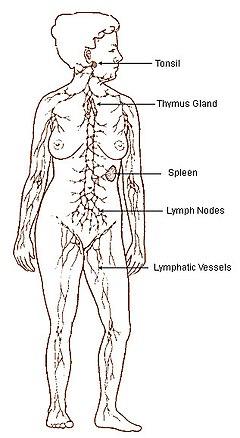 cancer limfatic definitie