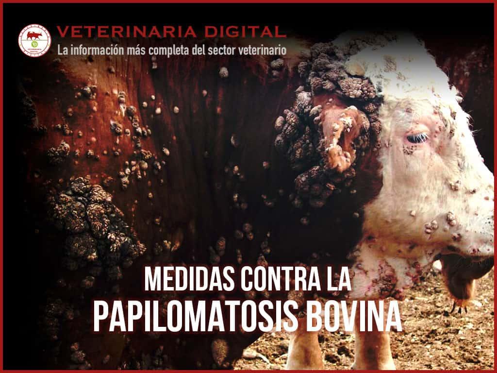 que es papilomatosis en bovinos
