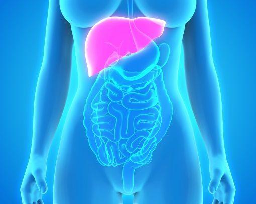 cancer pancreas metastase foie survie