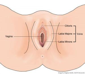 hpv labia cancer