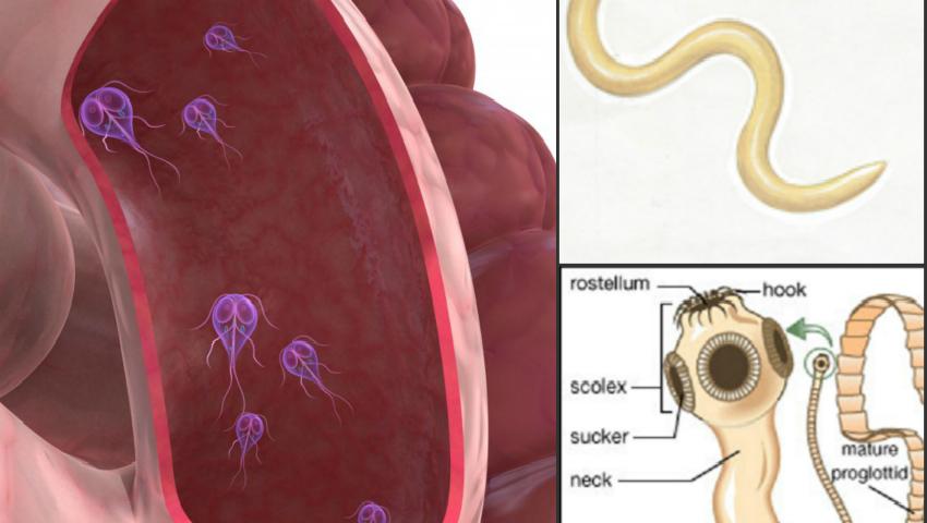 paraziti intestinali giardia