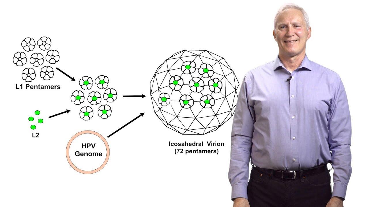 human papillomavirus john hopkins