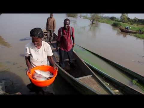 schistosomiasis lake victoria)