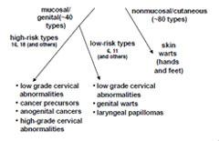 papillomavirus route of transmission whats ductal papilloma