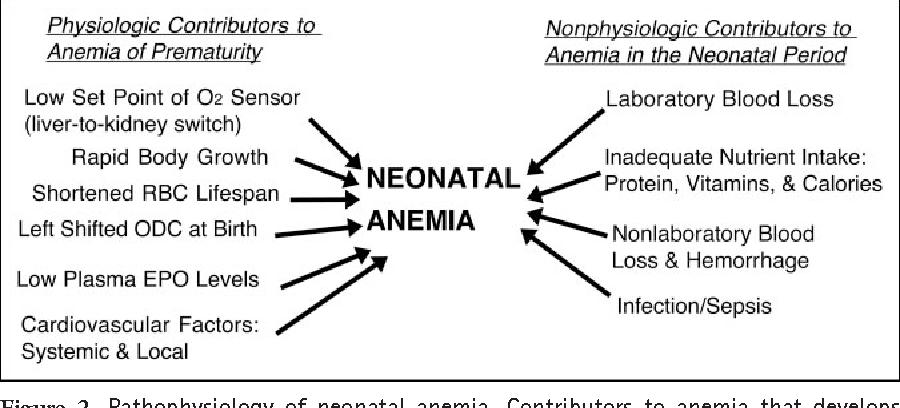 anemia of prematurity)