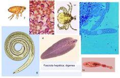 paraziti zapper