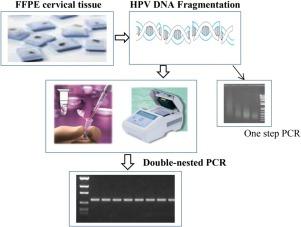 papillomavirus test procedure