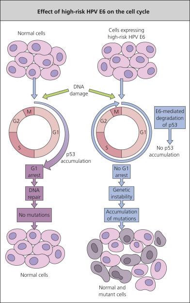 papilloma virus effect