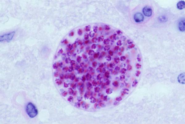 Lectie 12 Celenterate. Viermi Paraziti Lati.