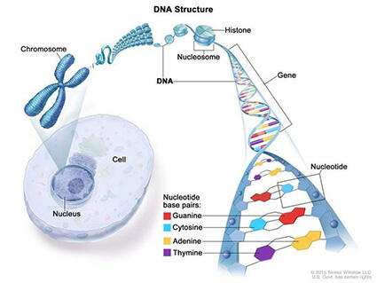 cancer genetic data)