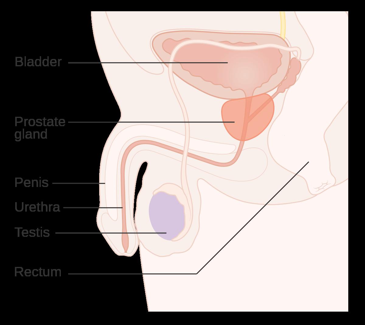 cancerul malign de prostata