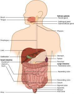 cauzele cancerului la pancreas