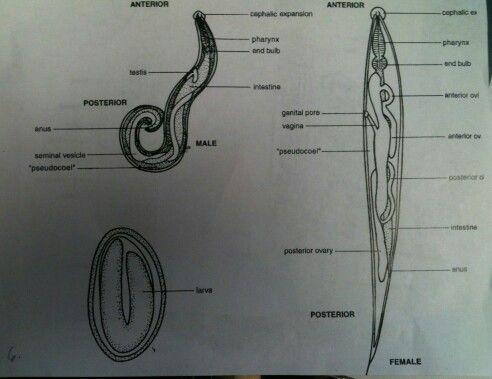 Urină – sediment | Synevo