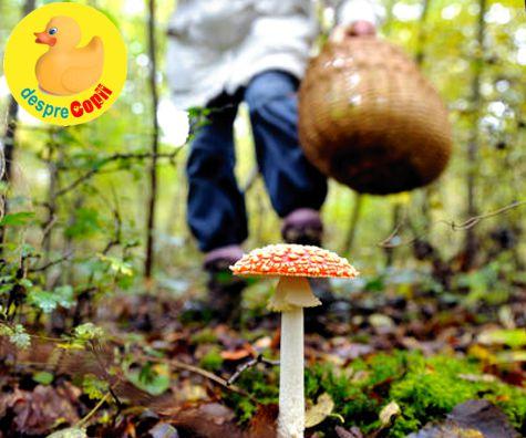ciuperci alaptare