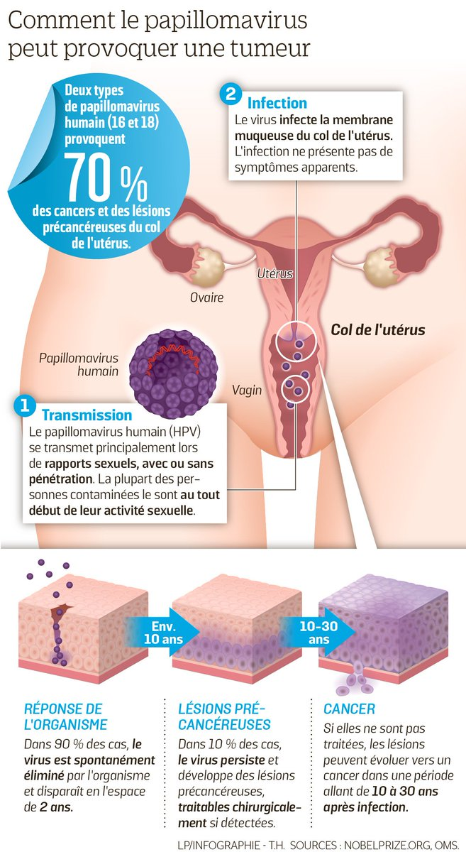 papillomavirus col uterus