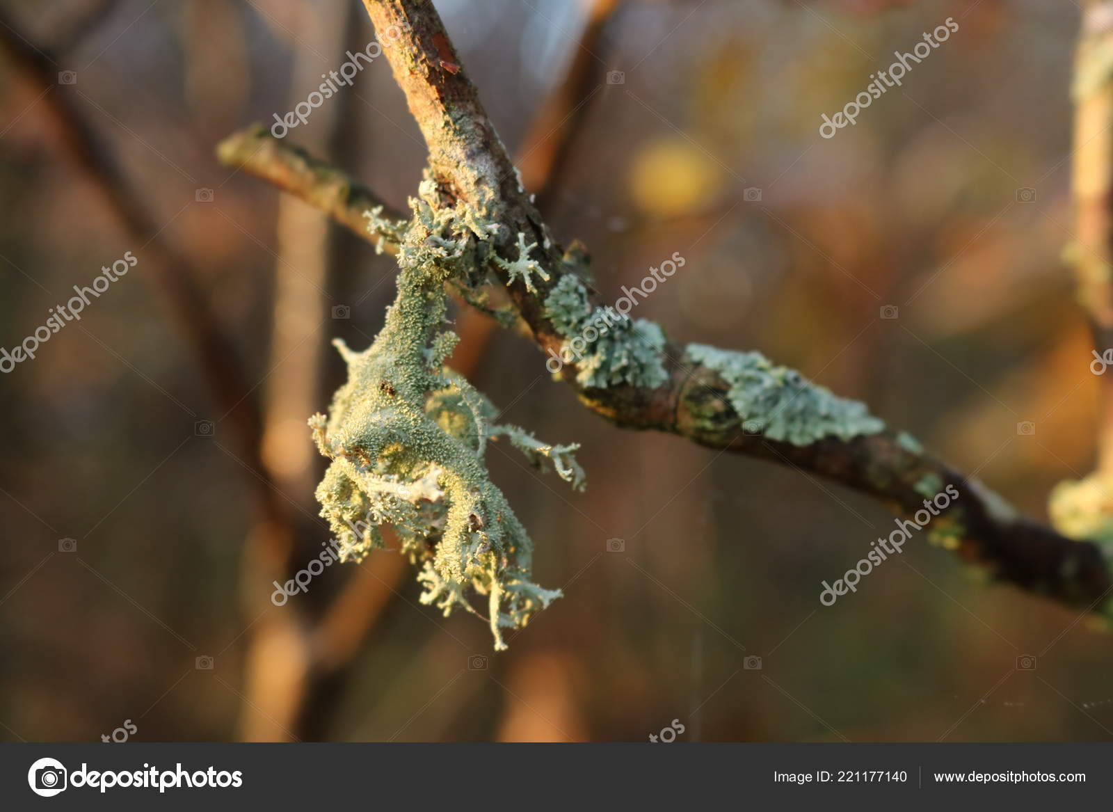 malignant ductal papilloma
