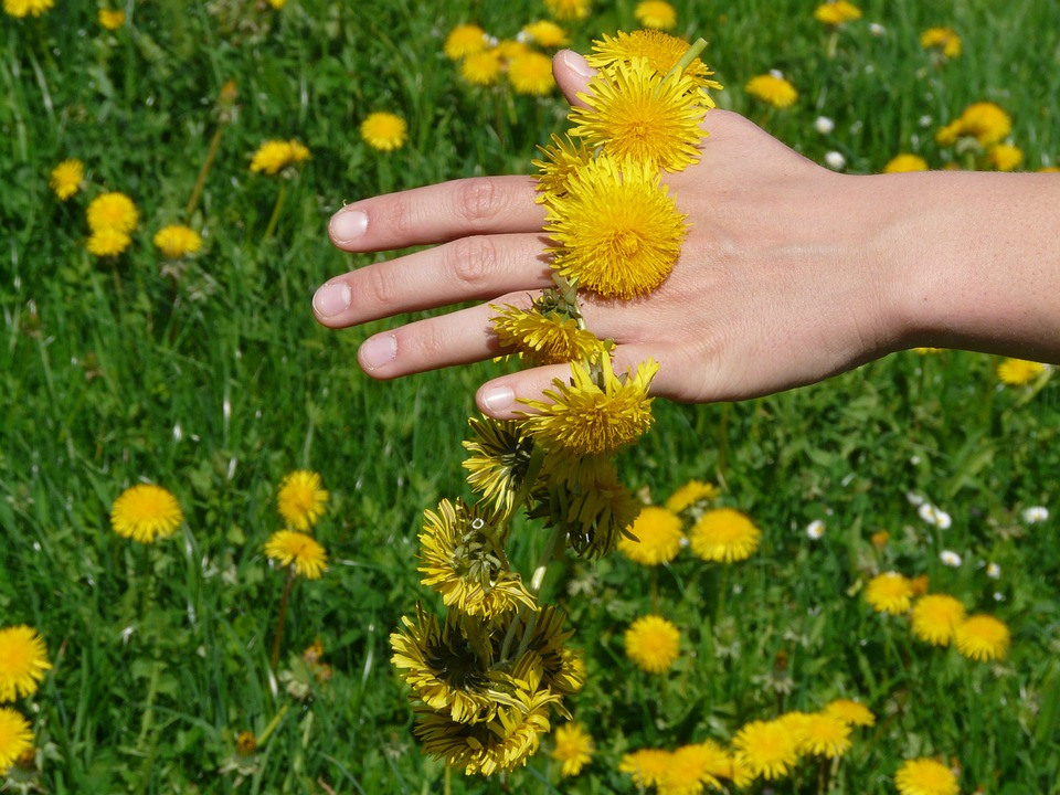 Complex detoxifiant natural - Hofigal - Natura Vie, magazin naturist