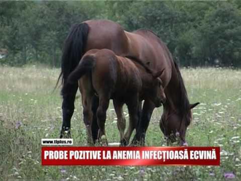 anemie infectioasa ecvina)