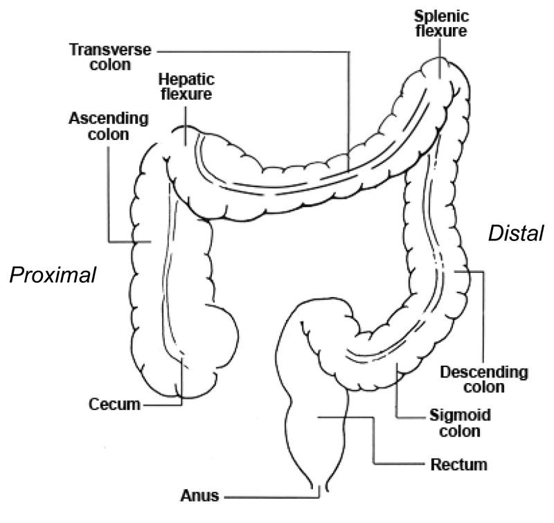 Cancerul de colon local avansat -licenţa (Repaired)