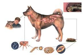 paraziti ve stolici u psa