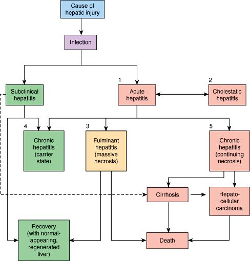 hepatic cancer pathophysiology)