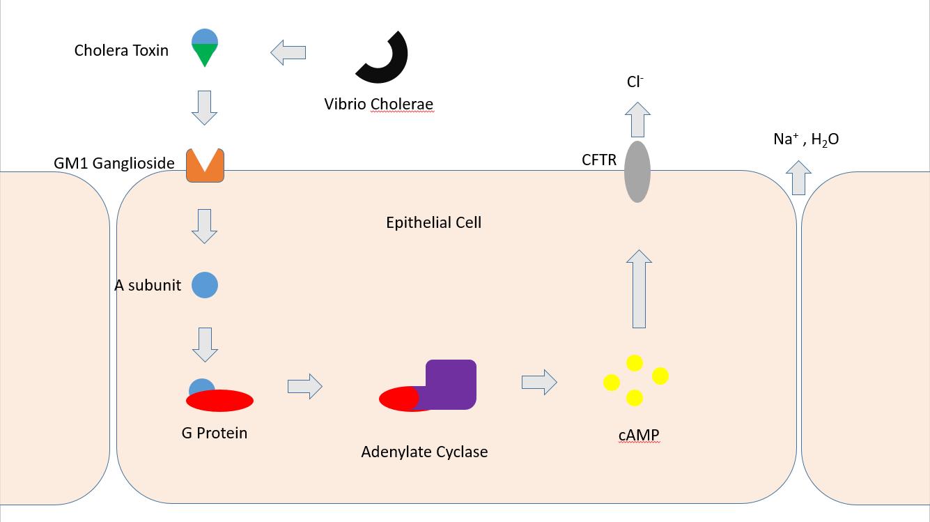 detoxifierea organismului reactii papiloma virus colposcopie