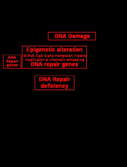 papillomavirus comment soigner chez lhomme