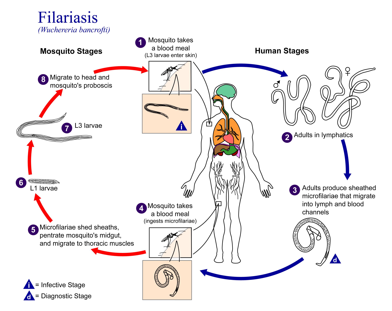 analisis filariasis - Căutaţi