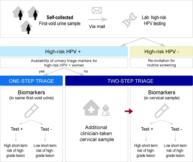 hpv triage definition)