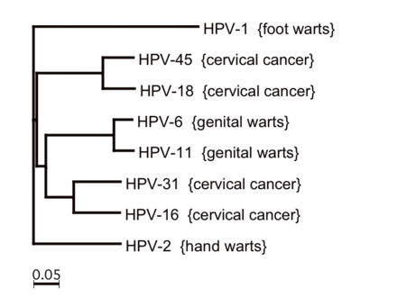 hpv types associated with warts)
