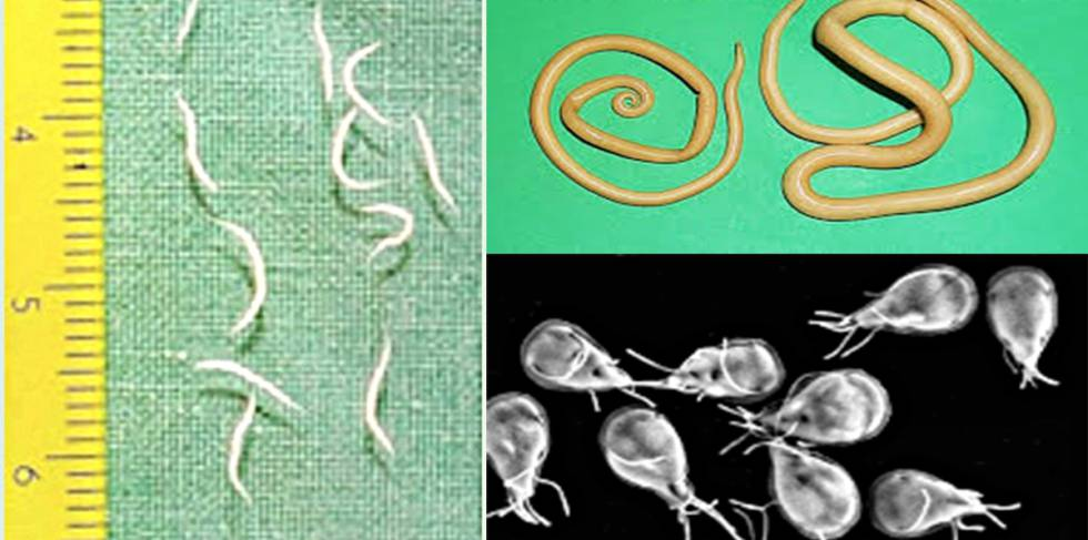 oxiuros nematodos que significa virus papiloma humano