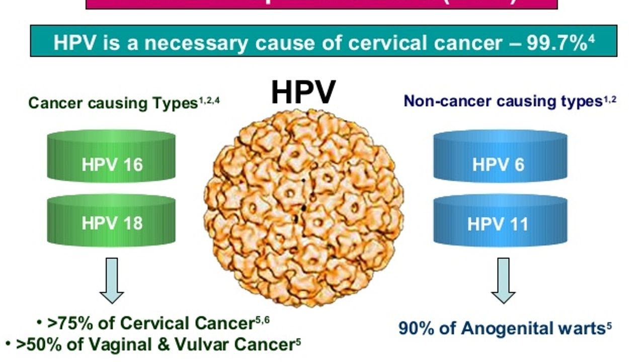 link between hpv and cervical cancer)