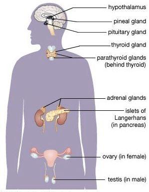 neuroendocrine cancer adrenal gland)