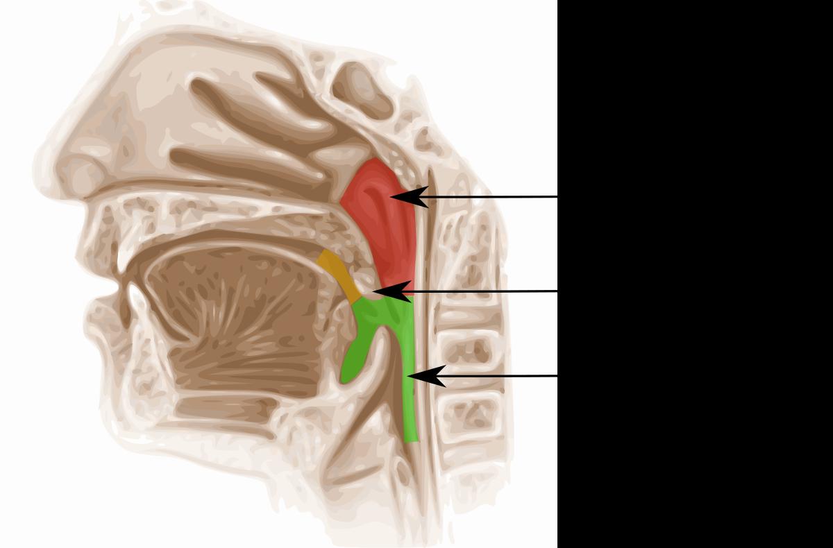 papilloma della tonsilla)