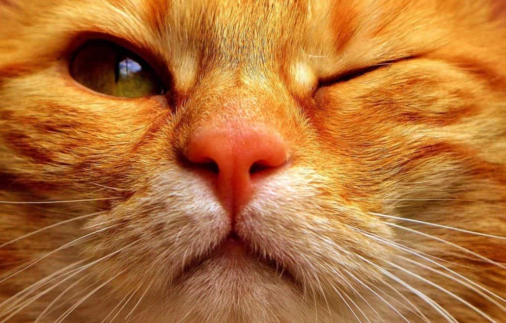 papilloma virus nel gatto papilloma virus esami uomo