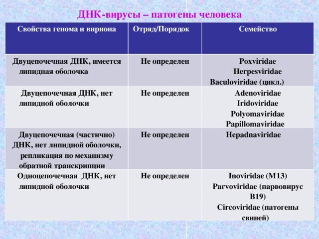 papillomaviridae epidemiologia