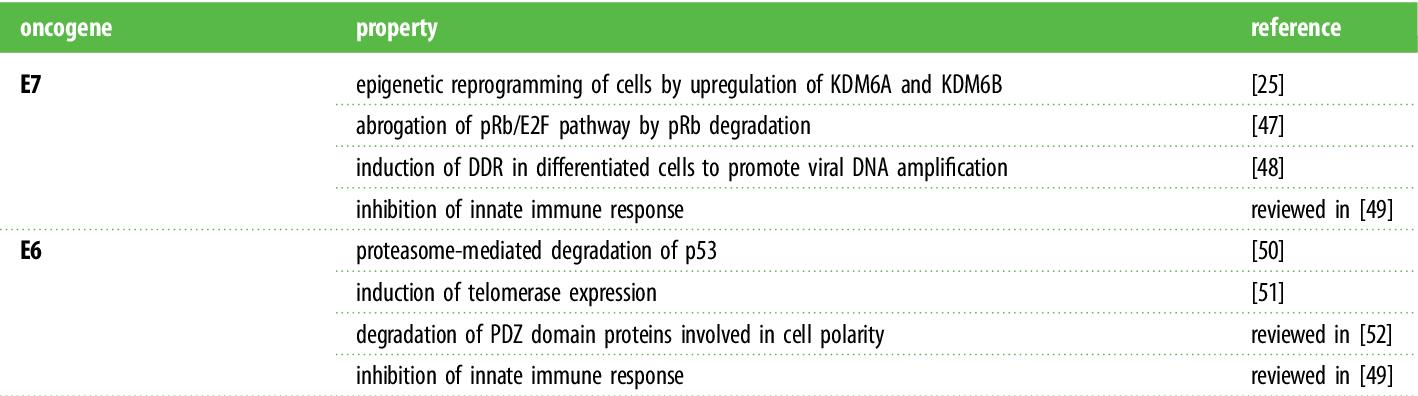 papillomaviruses oncogenic)