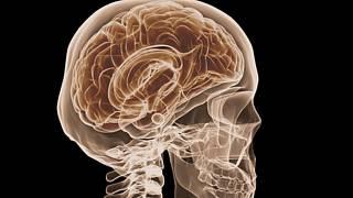 paraziti v mozku