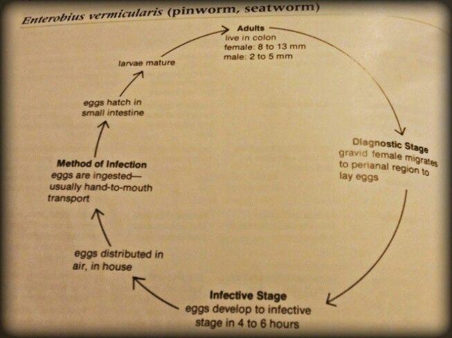 viața pinworms endometrial cancer epidemiology