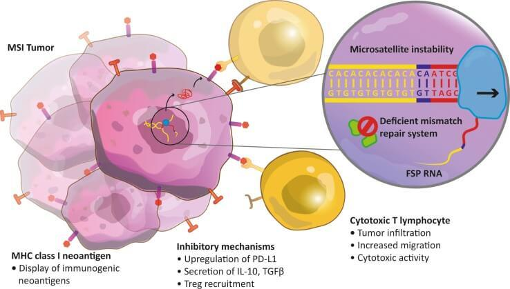 peritoneal cancer immunotherapy)