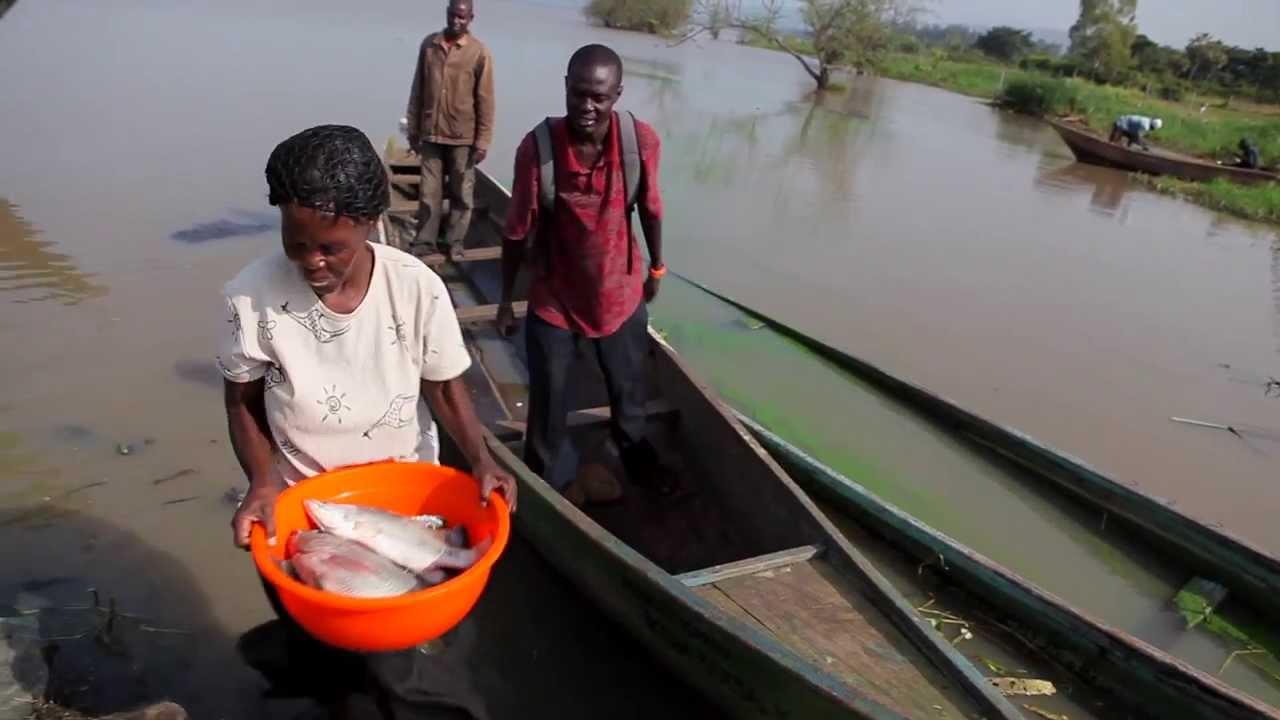 schistosomiasis lake victoria